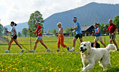 Nordic Walking in Ramsau am Dachstein